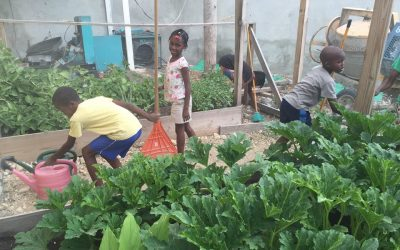 5 Lessons from Our Haitian Garden