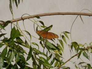 butterfly in leaves