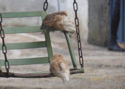birds on a green swing