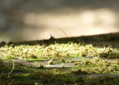 tree pollen fallen to ground