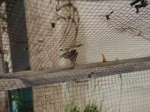 view of butterfly through garden netting